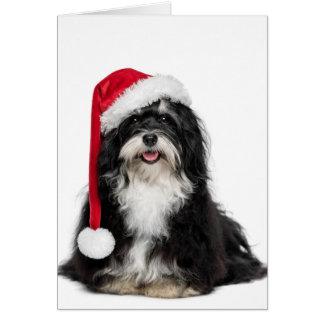 Perro divertido de Havanese del navidad con el Tarjeton