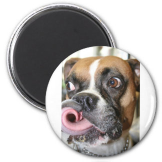 Perro divertido del boxeador iman de frigorífico