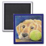 Perro divertido del golden retriever con la pelota imanes