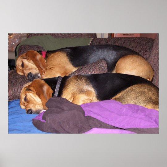 Perro doble cansado póster