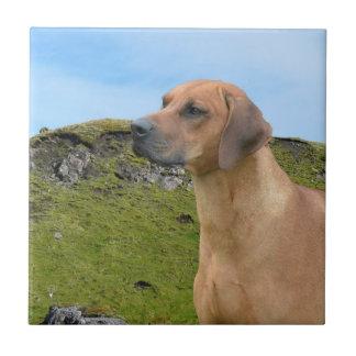 Perro dulce de Rhodesian Ridgeback Azulejo Cuadrado Pequeño