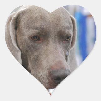 Perro dulce de Weimaraner Pegatina Corazon