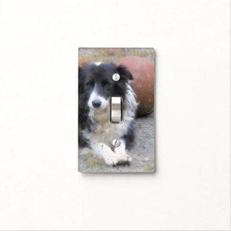 Perro dulce del border collie con la bola tapa para interruptor