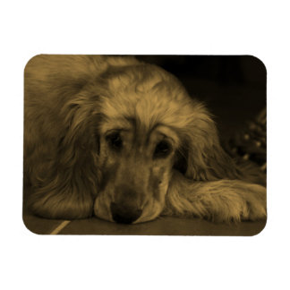 Perro dulce - golden retriever en tonos de la iman rectangular