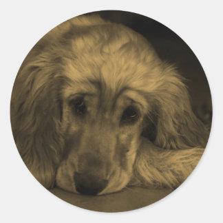 Perro dulce - golden retriever en tonos de la pegatina redonda