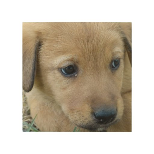 Perro dulce impresiones en madera
