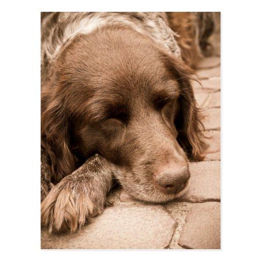 Perro el dormir en sepia tarjeta postal