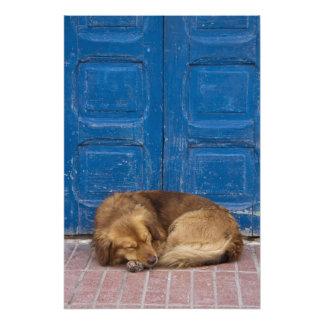 Perro el dormir, Essaouira, Marruecos Cojinete