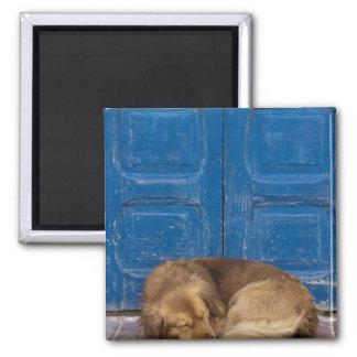 Perro el dormir, Essaouira, Marruecos Imán Cuadrado