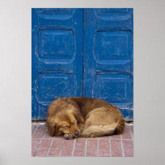 Perro el dormir, Essaouira, Marruecos Póster