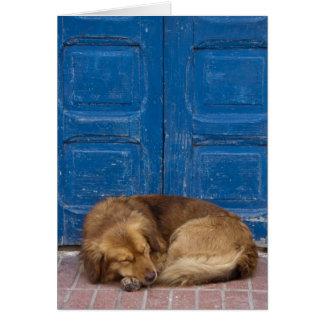 Perro el dormir, Essaouira, Marruecos Felicitación