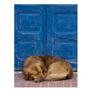 Perro el dormir, Essaouira, Marruecos Postal