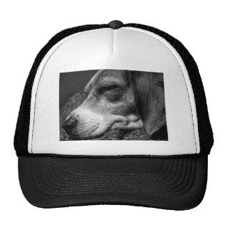 Perro el dormir gorro