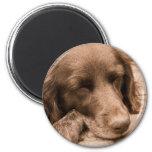 Perro el dormir iman para frigorífico