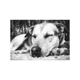 Perro el dormir impresión en lienzo estirada