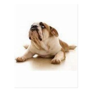 (perro) el estimado señor le agradece por dejarme tarjeta postal