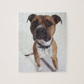 Perro, el sentarse de Staffordshire Terrier americ Puzzle