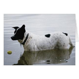 Perro en agua con la pelota de tenis tarjeta de felicitación