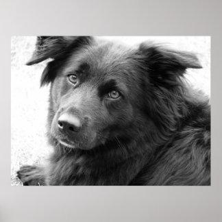 Perro en blanco y negro póster