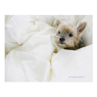 Perro en cama postal
