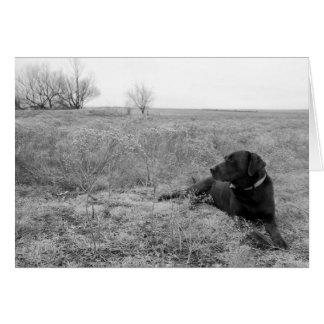 Perro en campo tarjeta de felicitación