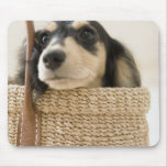 Perro en cesta alfombrilla de raton