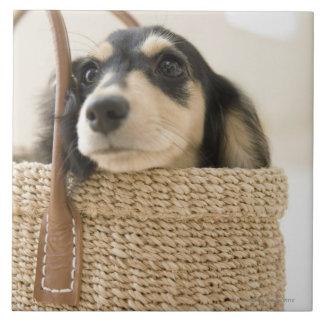 Perro en cesta azulejo cuadrado grande