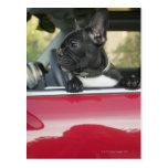 Perro en coche postal
