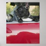 Perro en coche poster