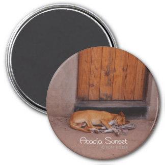 Perro en descanso imán redondo 7 cm