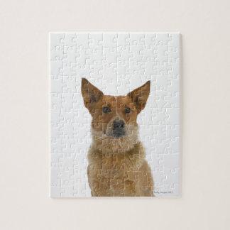 Perro en el blanco 01 rompecabezas
