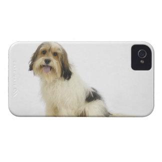 Perro en el blanco 104 iPhone 4 coberturas