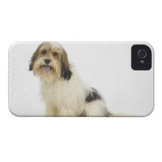 Perro en el blanco 104 iPhone 4 funda
