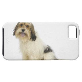 Perro en el blanco 104 iPhone 5 carcasa