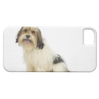 Perro en el blanco 104 iPhone 5 funda