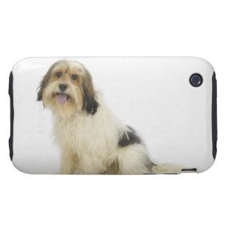 Perro en el blanco 104 tough iPhone 3 fundas