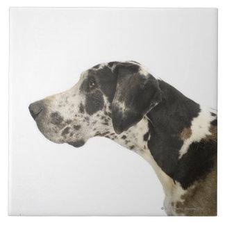 Perro en el blanco 11 azulejos cerámicos