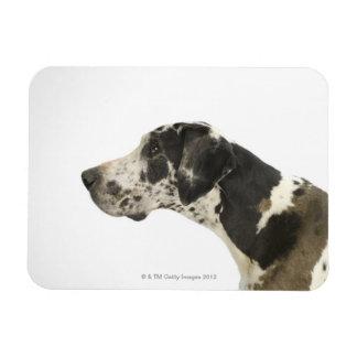 Perro en el blanco 11 iman rectangular