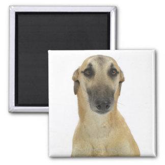 Perro en el blanco 41 imán cuadrado