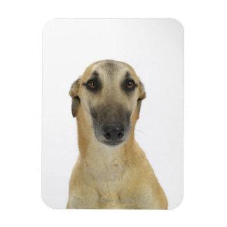 Perro en el blanco 41 imán foto rectangular