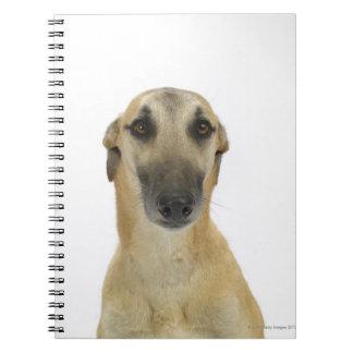 Perro en el blanco 41 libros de apuntes con espiral