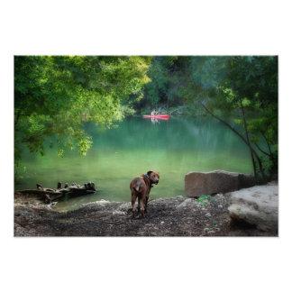 Perro en el lago ladybird - Austin céntrico Tejas Cojinete