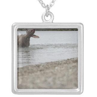 Perro en el lago que sacude del agua pendientes personalizados
