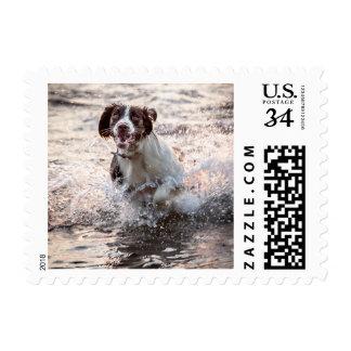 Perro en el sello de la playa