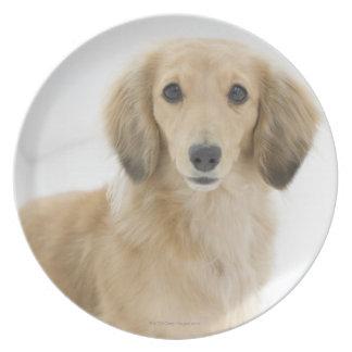 Perro en el sofá plato de comida