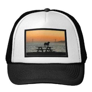 Perro en gorra de la puesta del sol