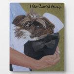 Perro en gorra en Horseshow Placas Con Foto