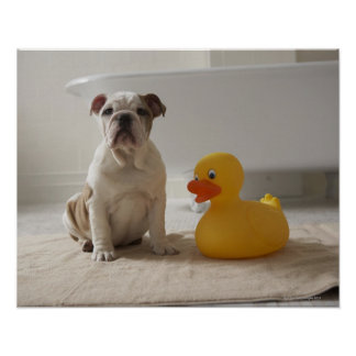 Perro en la estera con el pato plástico posters
