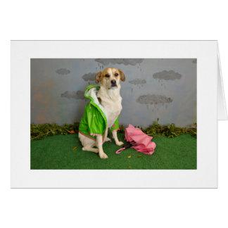 Perro en la lluvia con el paraguas, impermeable tarjeta de felicitación