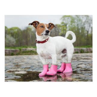 Perro en la lluvia postal